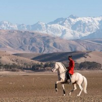Садек Эль Баджауи - фото 1932407_703005729719799_82187560_n-200x200, главная Разное Фото , конный журнал EquiLIfe