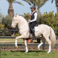 Садек Эль Баджауи - фото 1939444_722270211126684_2495834_n-200x200, главная Разное Фото , конный журнал EquiLIfe
