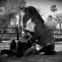 Садек Эль Баджауи - фото 1972424_722618907758481_76287312_n-200x200, главная Разное Фото , конный журнал EquiLIfe