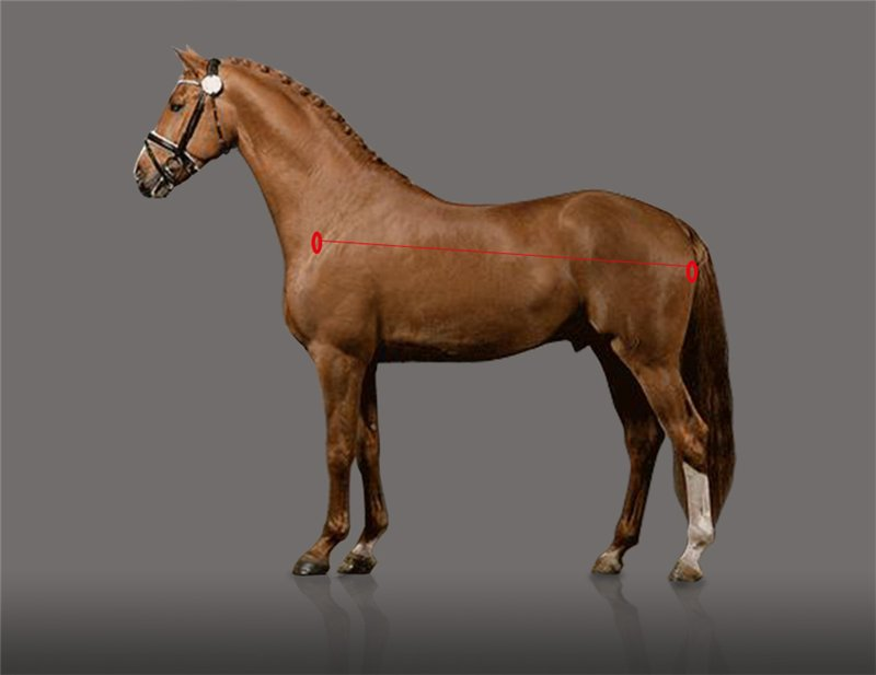 Есть ли шансы у российского спортивного коневодства? Или все об экстерьере лошади. - фото 4, главная Разное Тренинг , конный журнал EquiLIfe