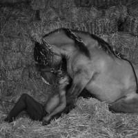 Садек Эль Баджауи - фото 412513_367489269938115_1502600213_o-200x200, главная Разное Фото , конный журнал EquiLIfe