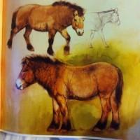 Художник Рин Поортвлит (Rien Poortvliet)   - фото 55351c83ed8836231247a751ac7e9201-200x200, главная Разное , конный журнал EquiLIfe