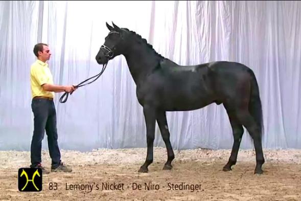 Есть ли шансы у российского спортивного коневодства? Или все об экстерьере лошади. - фото 6, главная Разное Тренинг , конный журнал EquiLIfe
