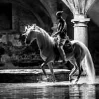 Садек Эль Баджауи - фото tumblr_o0s2dk06vG1t0go5oo1_500-200x200, главная Разное Фото , конный журнал EquiLIfe