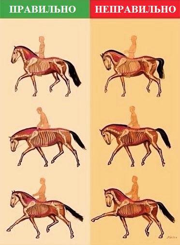 Основные термины, используемые для характеристики движений лошади в выездке - фото wdLLBH2vsCY, главная Разное Тренинг , конный журнал EquiLIfe