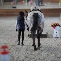 Необычные соревнования в Казахстане - фото 10262229_1039361116129060_7799322242017649245_n-200x200, Новости События , конный журнал EquiLIfe