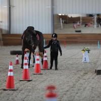 Необычные соревнования в Казахстане - фото 10292501_1039361066129065_5058377524073331582_n-200x200, Новости События , конный журнал EquiLIfe
