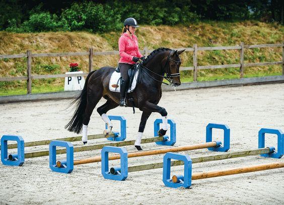 Что такое способности к верховой езде? - фото dressagetoday_com, главная Разное Тренинг , конный журнал EquiLIfe