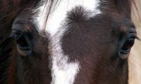 graceful_horse_033_b