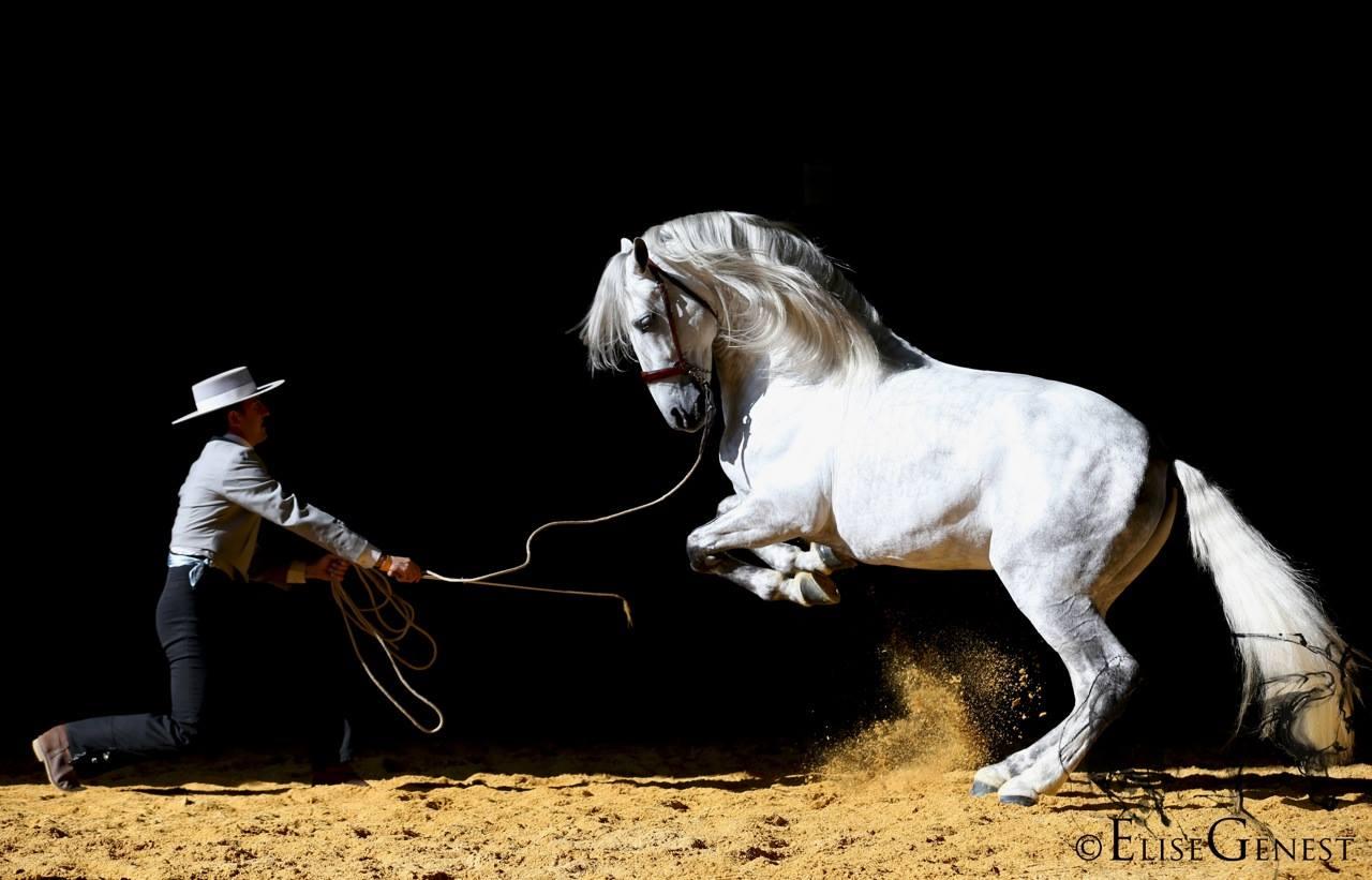 Конные выставки 2016 года - фото , главная Новости События , конный журнал EquiLIfe