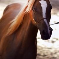Конный фотограф Александра Бабичева - фото 0IT6tBGmtRQ-200x200, главная Фото , конный журнал EquiLIfe