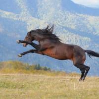 Конный фотограф Екатерина Друзь - фото 10297569_1395455877343560_7918174197790932126_n-200x200, главная Фото , конный журнал EquiLIfe