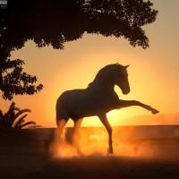 Конный фотограф Екатерина Друзь - фото 10390512_1556210547934758_5971608786185094952_n-200x200, главная Фото , конный журнал EquiLIfe