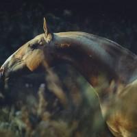 Конный фотограф Екатерина Друзь - фото 10450610_1398532350369246_99409508289778638_n-200x200, главная Фото , конный журнал EquiLIfe