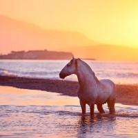 Конный фотограф Екатерина Друзь - фото 10455845_1395756723980142_4749880548443281927_n-200x200, главная Фото , конный журнал EquiLIfe