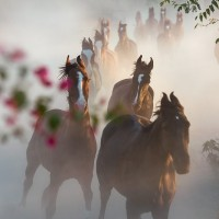 Конный фотограф Екатерина Друзь - фото 10606602_1401882546700893_5675635059849248171_n-200x200, главная Фото , конный журнал EquiLIfe