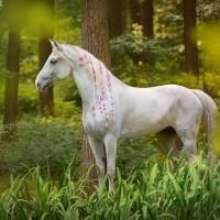 Конный фотограф Екатерина Друзь - фото 10624946_1398722290350252_2145325877082018373_n-200x200, главная Фото , конный журнал EquiLIfe
