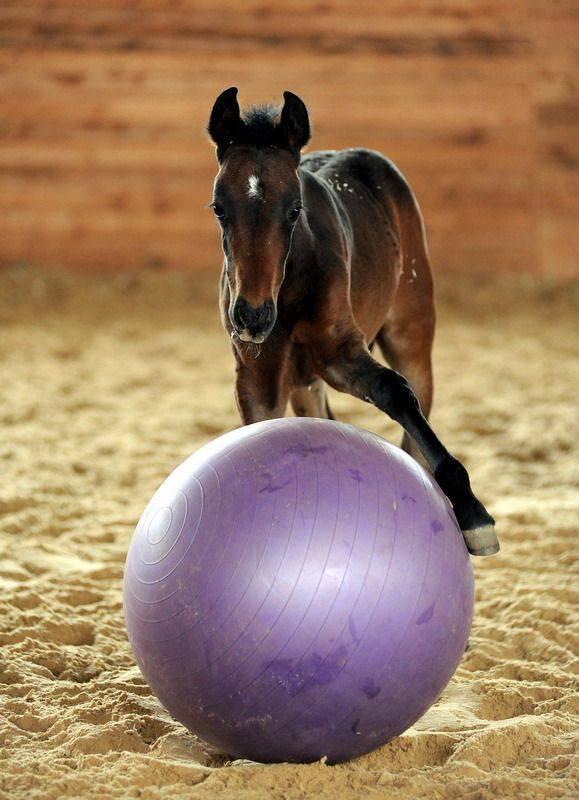Лошадь и мяч - фото 10888729_10152776802598775_8686488377083677650_n, главная Разное Тренинг , конный журнал EquiLIfe