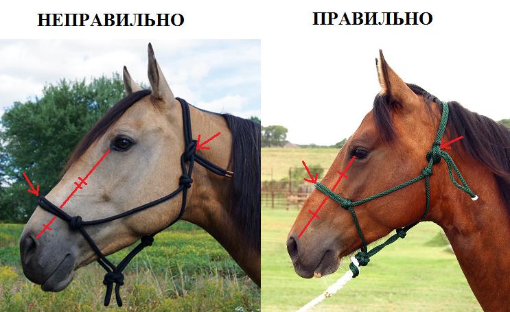 Правильный подбор и подгонка верёвочного недоуздка - фото 11, главная Разное , конный журнал EquiLIfe