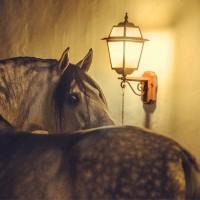 Конный фотограф Екатерина Друзь - фото 11221956_1538909882998158_8358560864116056657_n-200x200, главная Фото , конный журнал EquiLIfe