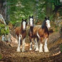 Конный фотограф Екатерина Друзь - фото 11988605_1540690559486757_1799447541974025542_n-200x200, главная Фото , конный журнал EquiLIfe