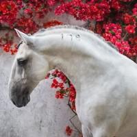 Конный фотограф Екатерина Друзь - фото 12108060_1550055448550268_919185057214626144_n-200x200, главная Фото , конный журнал EquiLIfe