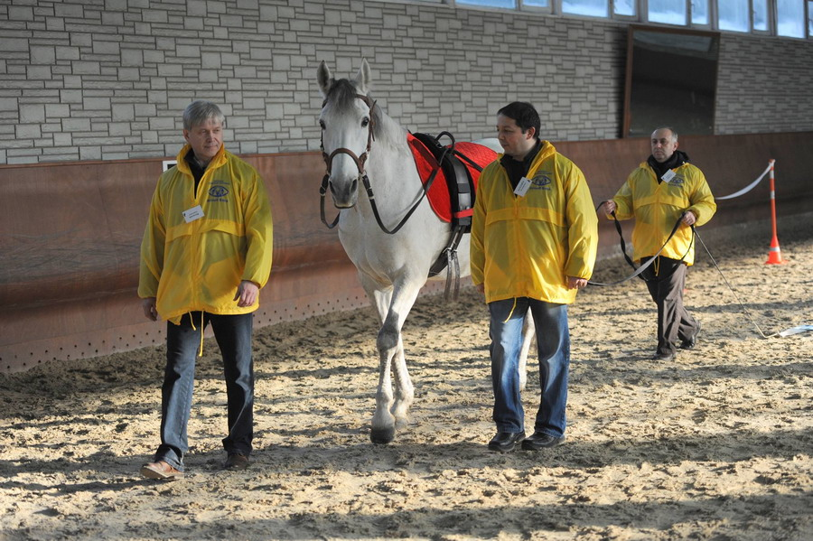 Интервью с Ольгой Платоновой представителем HorseDream в России - фото 12722706_1058002410929415_1761002393_o, главная Интервью , конный журнал EquiLIfe