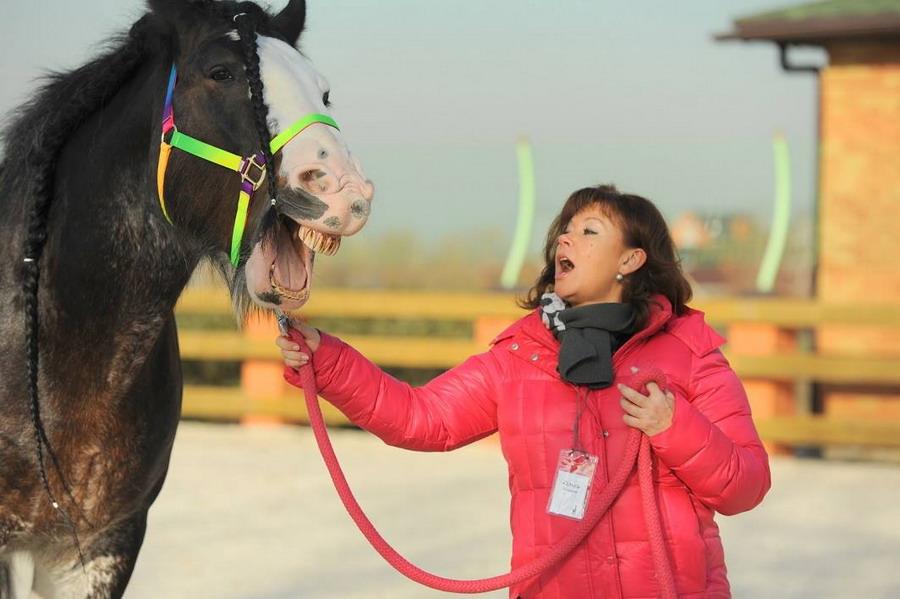 Интервью с Ольгой Платоновой представителем HorseDream в России - фото 12736777_1057998790929777_1460334068_o, главная Интервью , конный журнал EquiLIfe