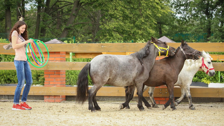 Интервью с Ольгой Платоновой представителем HorseDream в России - фото 12737103_1057999380929718_978379053_o, главная Интервью , конный журнал EquiLIfe