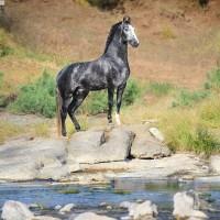 Конный фотограф Екатерина Друзь - фото 12745756_1595168790705600_2336254826783831410_n-200x200, главная Фото , конный журнал EquiLIfe