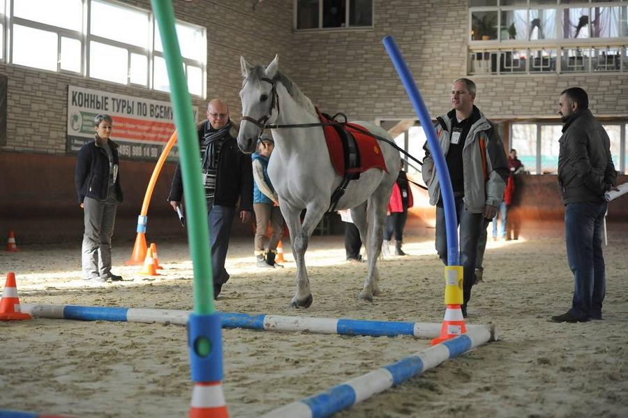 Интервью с Ольгой Платоновой представителем HorseDream в России - фото 12751645_1057998934263096_1580130882_o, главная Интервью , конный журнал EquiLIfe