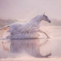 Конный фотограф Екатерина Друзь - фото 12801297_1599528730269606_3959093079653917089_n-200x200, главная Фото , конный журнал EquiLIfe