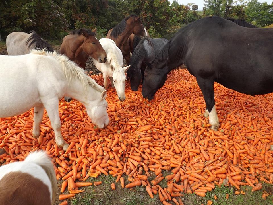 Кормление лошади: основные принципы практического составления рационов - фото 1oLjRJwjhHg, главная Рацион , конный журнал EquiLIfe