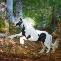 Конный фотограф Екатерина Друзь - фото 21506_1575758739313272_6424149966987829757_n-200x200, главная Фото , конный журнал EquiLIfe