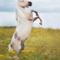 Конный фотограф Александра Бабичева - фото 6jI1eZPhByA-200x200, главная Фото , конный журнал EquiLIfe