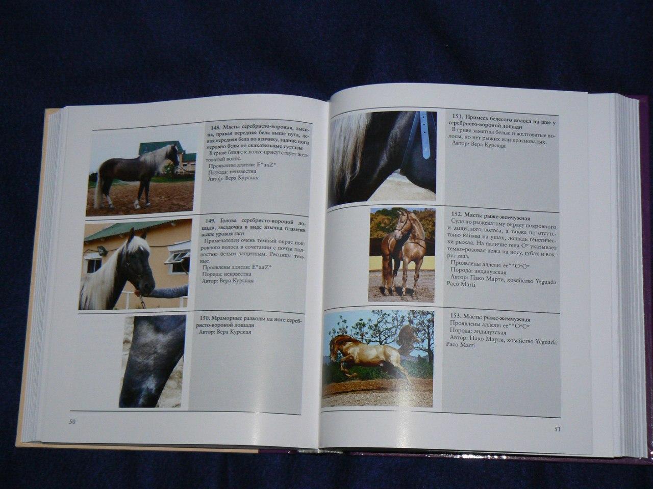 Книга  «Масти лошадей» В.А. Курской - фото 9gSjI1DDmtg, главная Книги о лошадях , конный журнал EquiLIfe