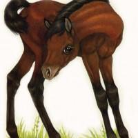 Художница Робин Джеймс (Robin James) - фото Bay72dpism-200x200, главная Фото , конный журнал EquiLIfe