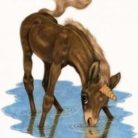 Художница Робин Джеймс (Robin James) - фото Brown-drinking72dpism-200x200, главная Фото , конный журнал EquiLIfe
