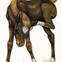 Художница Робин Джеймс (Robin James) - фото Brown-socks72dpism-200x200, главная Фото , конный журнал EquiLIfe