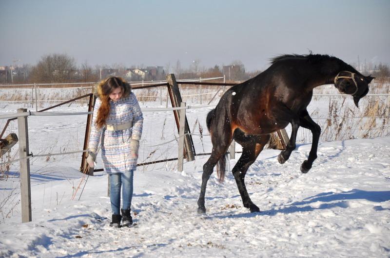 Популярная конная группа ВКонтакте, интервью с Софией Гофман - фото CUjfsTzD0y4, главная Интервью , конный журнал EquiLIfe