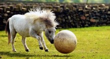 пони и мяч