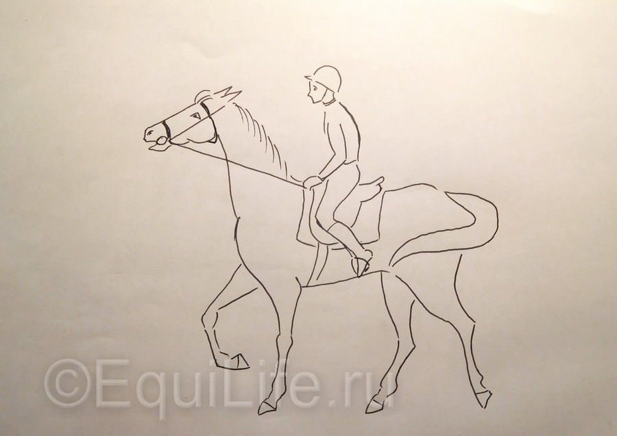 Учебная рысь: работа над ошибками. - фото DSCN5109_wm2, главная Тренинг , конный журнал EquiLIfe