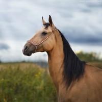 Конный фотограф Александра Бабичева - фото DkLRloDg9LA-200x200, главная Фото , конный журнал EquiLIfe
