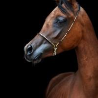 Конный фотограф Александра Бабичева - фото FOV6QjQQPGI-200x200, главная Фото , конный журнал EquiLIfe