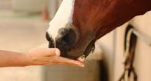 Поощрение лошади