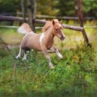 Конный фотограф Александра Бабичева - фото IuRVHDpWr1Q-200x200, главная Фото , конный журнал EquiLIfe