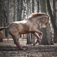 Конный фотограф Александра Бабичева - фото LL5rcrv414s-200x200, главная Фото , конный журнал EquiLIfe