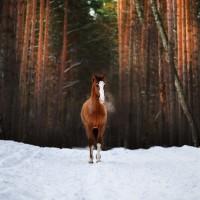 Конный фотограф Александра Бабичева - фото LTz6gRdgNX4-200x200, главная Фото , конный журнал EquiLIfe
