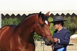 Поощрение - залог успеха в обучении  - фото MG_52711, главная Тренинг , конный журнал EquiLIfe