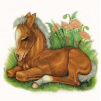 Художница Робин Джеймс (Robin James) - фото Palomino72dpism-200x200, главная Фото , конный журнал EquiLIfe
